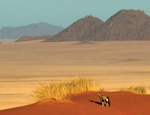 Destination Namibia