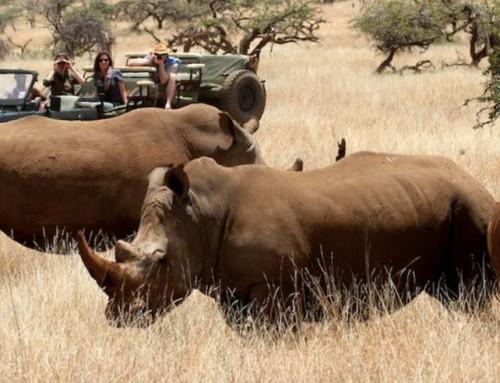 Technology on Safari