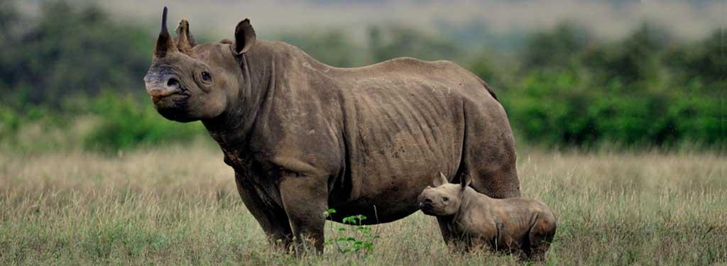 Black Rhino wide