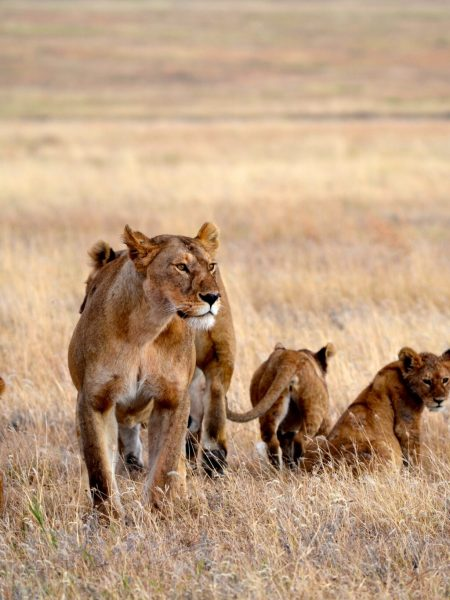 Kenya  Private Reserves