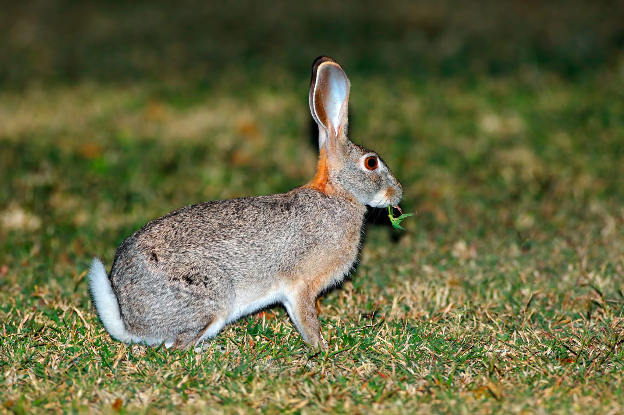 Spring-Hare-scaled.jpg