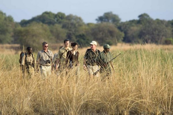 Walking Safari - Zambia