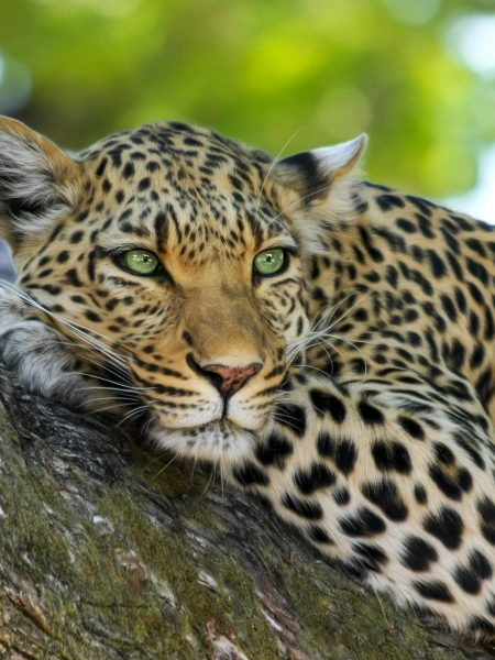 Discover Zambia:  Wilderness and Walking 12 Days