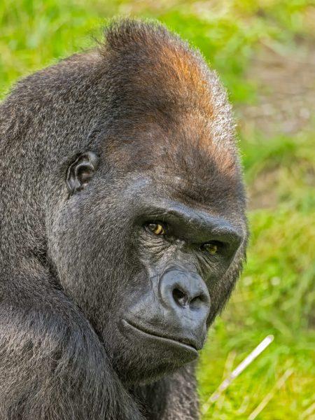 Congo Discovery