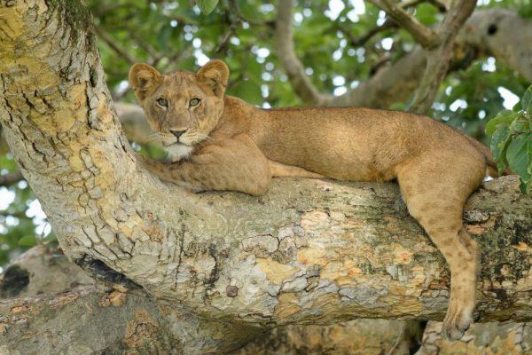 Queen Elizabeth Park - Tree Lions