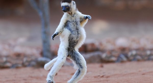 Madagascar - Beaches and Lemurs  -10 Days